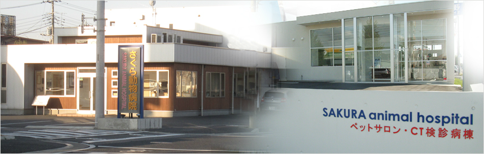 《予約可》さくら動物病院 - 茨城県鹿嶋市(動物病 …